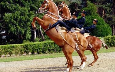 Club Belambra: faire de l'équitation