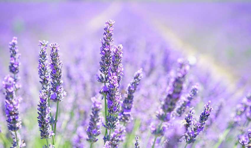 Résidences Odalys en Provence