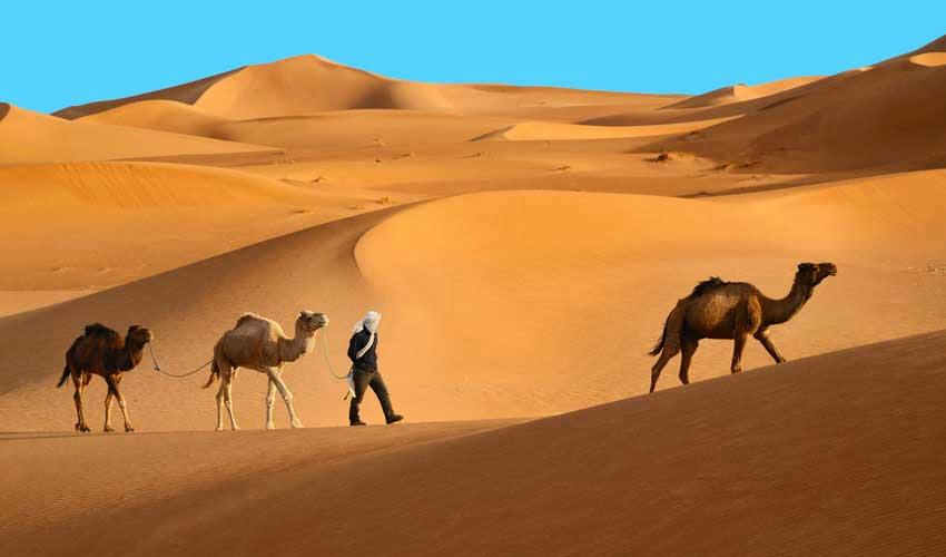 Thomas Cook : désert marrocain