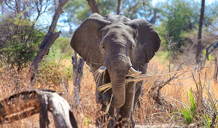 Thomas Cook : Voyage sur mesure pour voir les éléphants