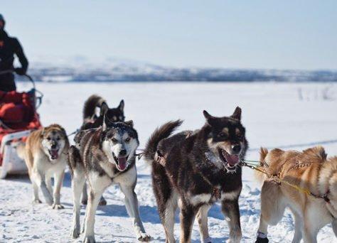 5 activités d'hiver originales à faire à la montagne en famille