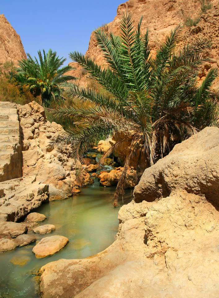 Tunisie : Tozeur Palmeraie