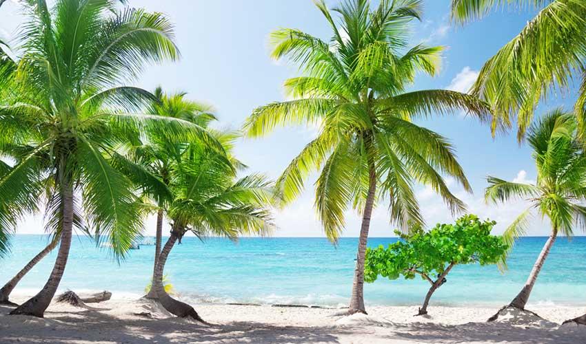 Punta Cana Isla Catalina plage