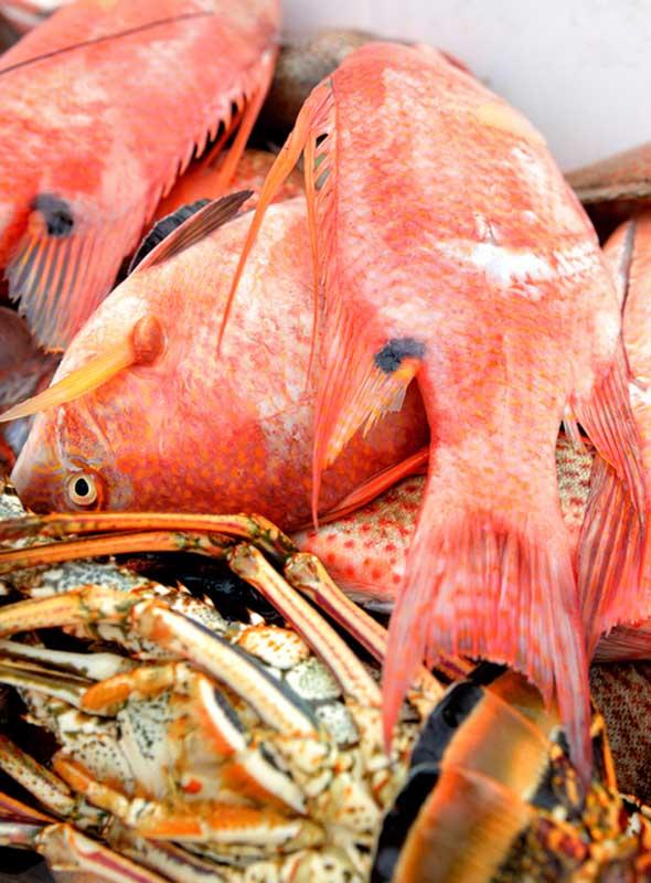 Punta Cana Las Galeras poissons