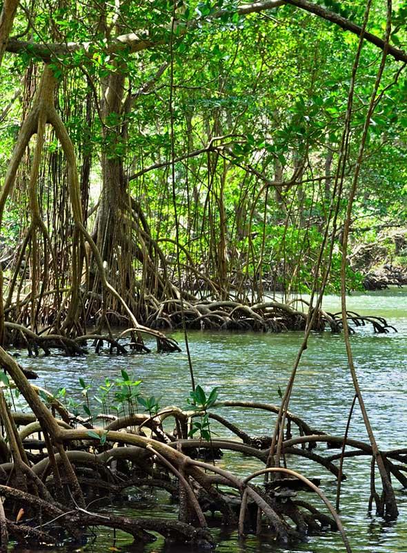 Punta Cana Los Haitises mangrove