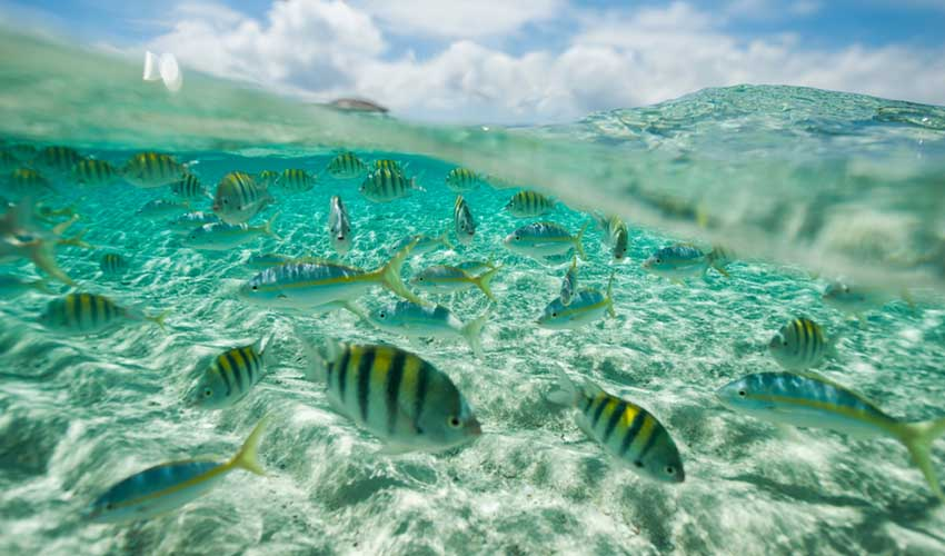 Punta Cana plongée sous-marine