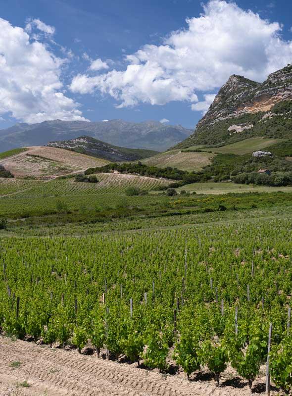 Vignobles du Cap Corse