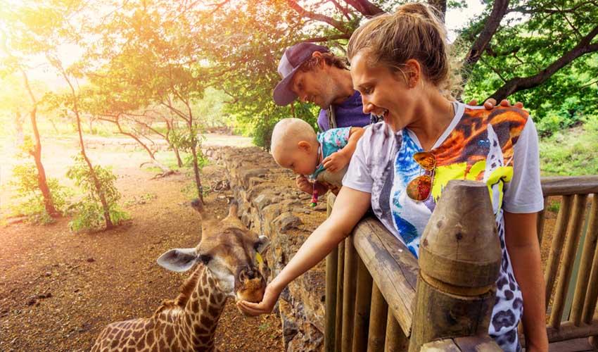 expedia agence activites visite famille zoo reserve naturelle girafe