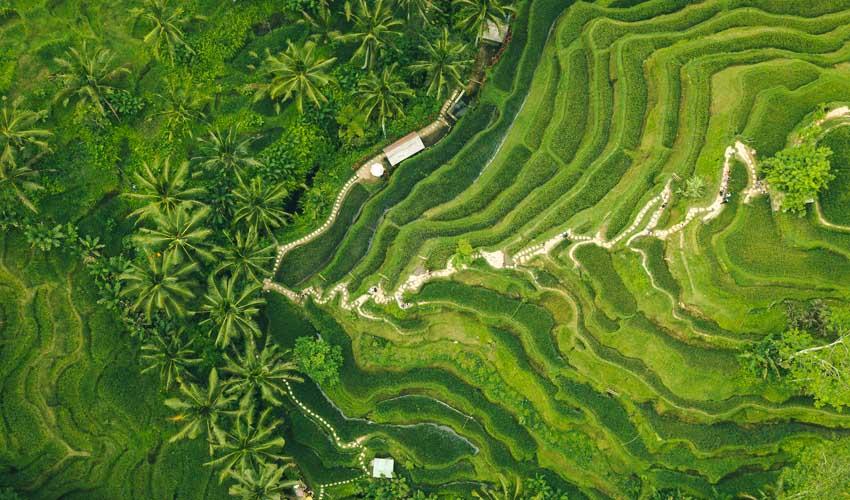 indonesie a faire vue aerienne riziere de bali