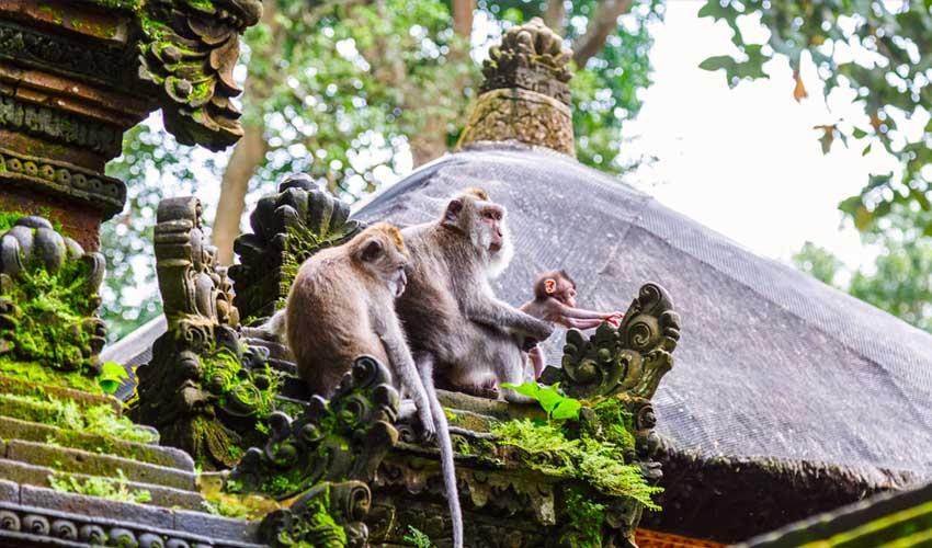 indonesie pas manquer sanctuaire de la foret des singes avec macaques
