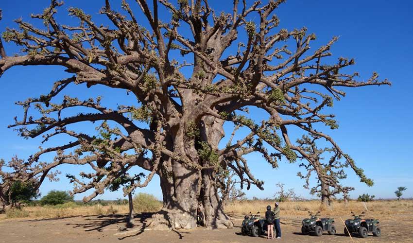 senegal pas cher guide visites excurssions quad baobab