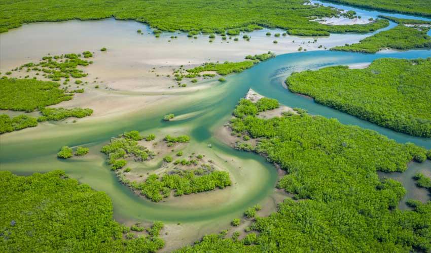 senegal pas manquer parc du delta de saloum reserve naturelle de mangroves casamance