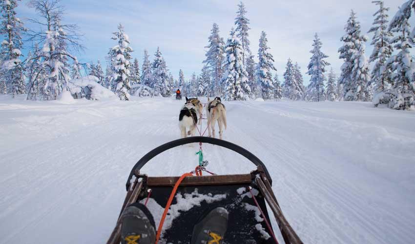 vvf villages animations clubs hiver chien de traineau activites sport