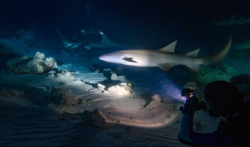maldives pas manquer ile d'alimatha requins plongee