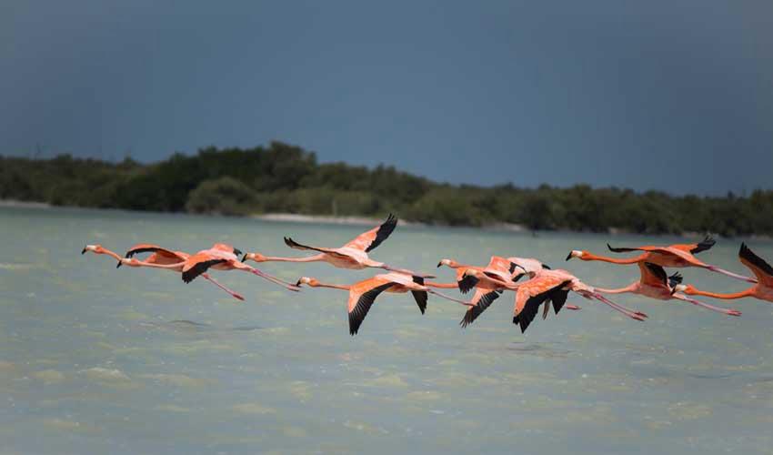 mexique pas manquer rio lagartos reserve flamands rose