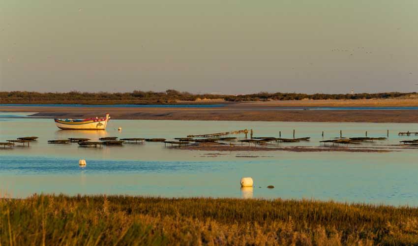 portugal pas manquer ria formosa parc naturel