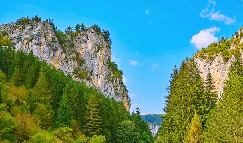 Randonnée dans les sapins en club vacances Bulgarie
