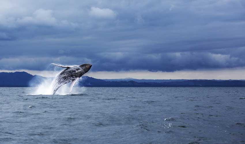 republique dominicaine pas cher excursion a samana observatoire des baleines a bosse