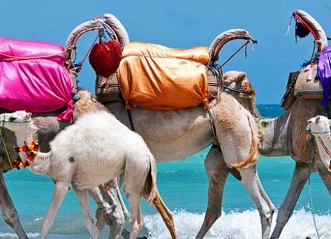 Club vacances Djerba