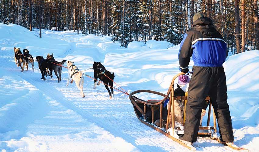 Balade en chiens de traîneaux dans la neige, montagne, France