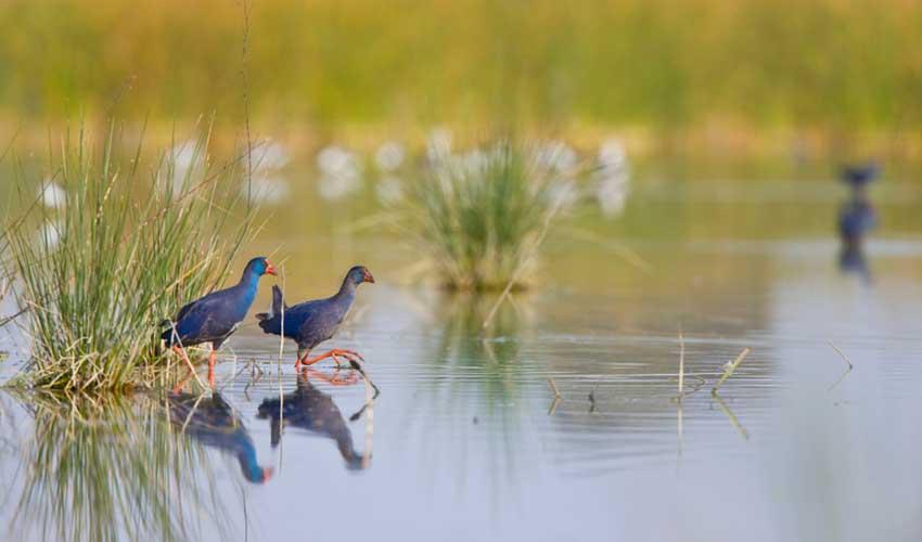 andalousie pas manquer parc national de donana oiseaux