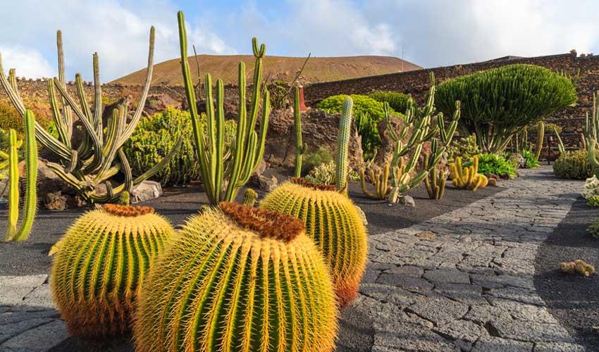 canaries pas manquer jardin des cactus a lanzarote