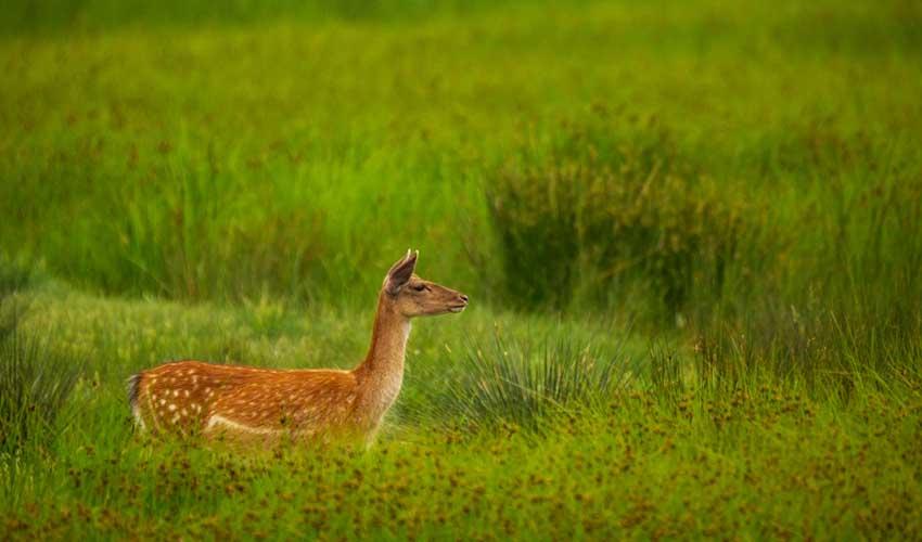 costa brava pas manquer reserve naturelle aiguamolls de l'emporda biche