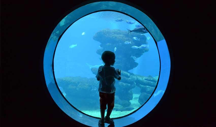 majorque a faire Palma Aquarium