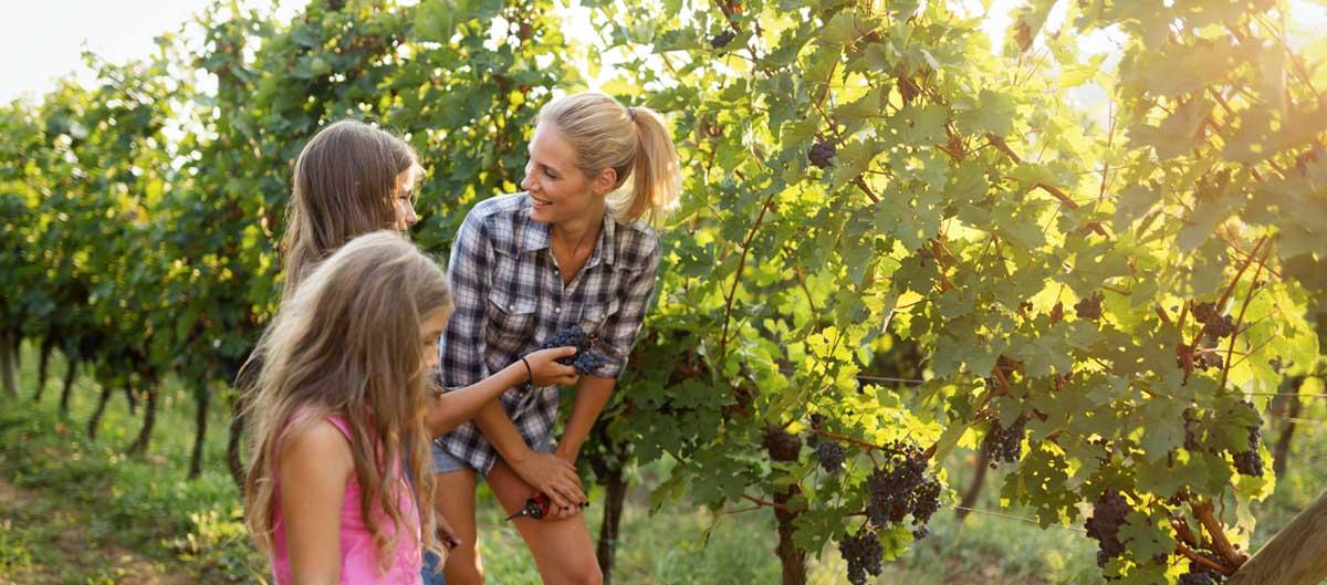 Huttopia vacances campagne et terroir campings famille vignes decouverte
