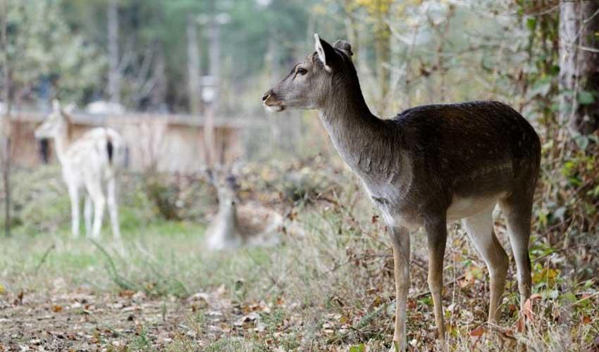 vacances nature center parcs le bois aux daims animaux