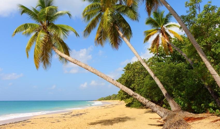 Découvrez la plage des Salines en Martinique