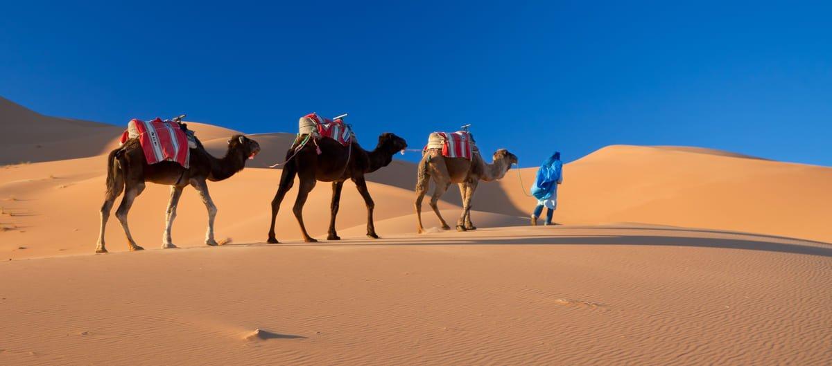 Méharée dans le désert au Maroc.