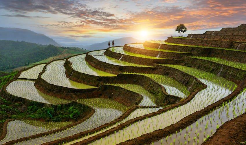 Rizières dans le nord de la Thaïlande.