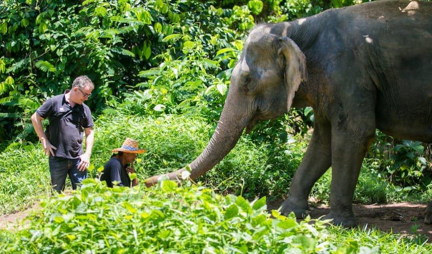 Le Phuket Elephant Sanctuary